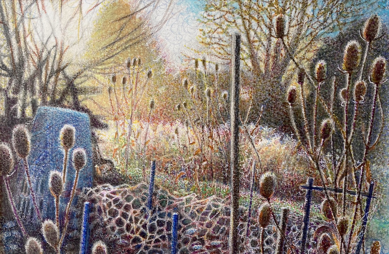Frost and Teasels coloured pencil and inks on paper 2020